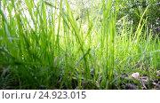 Купить «View of green grass from below», видеоролик № 24923015, снято 9 июня 2016 г. (c) Володина Ольга / Фотобанк Лори