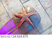 Купить «Red sea star on a violet paddle», фото № 24924875, снято 17 декабря 2016 г. (c) Евгений Дробитько / Фотобанк Лори