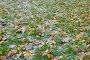 Иней на листьях и зеленой траве поздней осенью, фото № 24925043, снято 21 октября 2015 г. (c) Максим Мицун / Фотобанк Лори