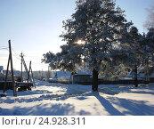 Сосна в снегу. Стоковое фото, фотограф Марина Пыхова / Фотобанк Лори