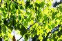 Green leaves, shallow focus, фото № 24930799, снято 24 июня 2015 г. (c) Валерия Потапова / Фотобанк Лори