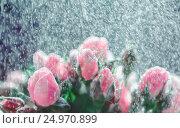 Roses Under Rain Splashes Out of Focus. Стоковое фото, фотограф Светлана Сухорукова / Фотобанк Лори