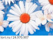 Flowers of Chrysanthemums And Jasmine Closeup. Стоковое фото, фотограф Светлана Сухорукова / Фотобанк Лори