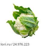 Купить «Цветная капуста на белом фоне», фото № 24976223, снято 12 сентября 2016 г. (c) Дудакова / Фотобанк Лори