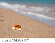Купить «Ракушка на песке и набегающие волны на заднем плане», фото № 24977071, снято 17 января 2018 г. (c) SummeRain / Фотобанк Лори