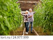 Купить «old couple picking tomatoes up at farm greenhouse», фото № 24977999, снято 25 августа 2016 г. (c) Syda Productions / Фотобанк Лори