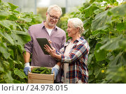Купить «senior couple with cucumbers and tablet pc on farm», фото № 24978015, снято 25 августа 2016 г. (c) Syda Productions / Фотобанк Лори