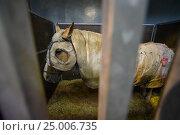 Купить «Лошадь в конюшне», фото № 25006735, снято 18 июля 2016 г. (c) AK Imaging / Фотобанк Лори