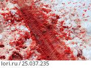 Протектор колеса на снегу. Стоковое фото, фотограф Кохан Пётр / Фотобанк Лори