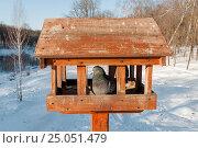Купить «Дикий голубь сидит в кормушке установленной в парке», эксклюзивное фото № 25051479, снято 30 января 2017 г. (c) Игорь Низов / Фотобанк Лори