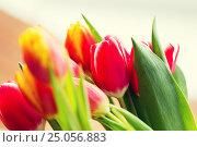Купить «close up of tulip flowers», фото № 25056883, снято 28 января 2016 г. (c) Syda Productions / Фотобанк Лори