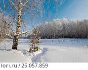 Купить «Сибирь, Уральский федеральный округ, Тюмень , лес зимой. Слетающий иней с берёзы, пейзаж», эксклюзивное фото № 25057859, снято 29 января 2017 г. (c) Александр Циликин / Фотобанк Лори