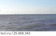 Купить «Большая стая птиц кружит над морем, чайки на воде», видеоролик № 25068343, снято 3 февраля 2017 г. (c) DiS / Фотобанк Лори
