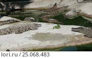 Купить «Scene with Big Crocodile», видеоролик № 25068483, снято 5 февраля 2017 г. (c) Владимир Журавлев / Фотобанк Лори