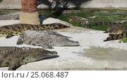 Купить «Scene with Big Crocodile», видеоролик № 25068487, снято 5 февраля 2017 г. (c) Владимир Журавлев / Фотобанк Лори