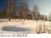 Winter landscape with birch by grove. Стоковое фото, фотограф Сергей Овчинников / Фотобанк Лори
