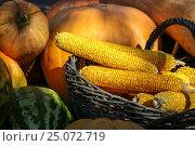 Купить «Кукуруза и другие осенние овощи», фото № 25072719, снято 23 августа 2016 г. (c) Дмитрий Сидоров / Фотобанк Лори