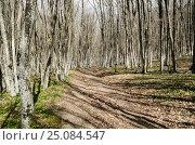 Купить «Грунтовая дорога в Крымском буковом лесу ранней весной», фото № 25084547, снято 29 марта 2014 г. (c) Выскуб Анна / Фотобанк Лори