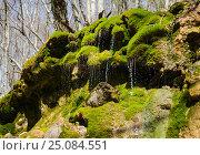 Купить «Зелёный водопад в Крымском лесу», фото № 25084551, снято 29 марта 2014 г. (c) Выскуб Анна / Фотобанк Лори