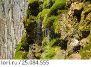 Купить «Вода стекает с камней поросших мхом», фото № 25084555, снято 29 марта 2014 г. (c) Выскуб Анна / Фотобанк Лори
