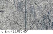 Купить «Branches of tree covered with frost on frosty day», видеоролик № 25086651, снято 30 января 2017 г. (c) Михаил Коханчиков / Фотобанк Лори