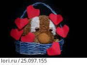 Handmaid basket with plushy dog and red origami hearts for Saint Valentine's Day on black background. Стоковое фото, фотограф Жданова Дарья Юрьевна / Фотобанк Лори