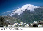 Купить «Mount Elbrus (5643m) Caucasus Mtns Kabardino Balkarskaya Russia», фото № 25101059, снято 24 сентября 2018 г. (c) Nature Picture Library / Фотобанк Лори