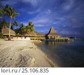 Купить «Beach huts, palm trees and a jetty in a tourist resort on Rangiroa, French Polynesia.», фото № 25106835, снято 18 июня 2019 г. (c) Nature Picture Library / Фотобанк Лори