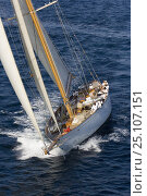 """Купить «J-Class K4 """"Cambria"""" arriving arriving from Cannes to Saint Tropez, France, for Les Voiles de Saint Tropez, October 2006. """"Cambria"""" is the biggest sloop designed by William Fife in 1928.», фото № 25107151, снято 16 июля 2018 г. (c) Nature Picture Library / Фотобанк Лори"""