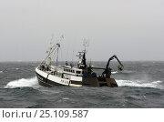 "Купить «Fishing vessel ""Nordfjordr"" during fishing operations to the North of the Shetland Isles, Scotland, July 2004.», фото № 25109587, снято 15 октября 2018 г. (c) Nature Picture Library / Фотобанк Лори"