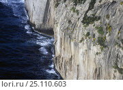 Купить «Steep cliffs along the coast at Cap de Formentor, Mallorca.», фото № 25110603, снято 21 августа 2018 г. (c) Nature Picture Library / Фотобанк Лори