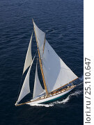 "Купить «Classic superyacht ""Mariquita"" arriving from Cannes to Saint Tropez, France, for Les Voiles de Saint Tropez, October 2006.», фото № 25110647, снято 21 августа 2018 г. (c) Nature Picture Library / Фотобанк Лори"