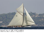 Купить «Gaff rigged classic, 'Moonbeam III', at Les Voiles de St Tropez regatta in 2004, France.», фото № 25112051, снято 16 июля 2018 г. (c) Nature Picture Library / Фотобанк Лори