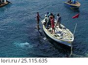 Купить «Locals from the island of Bequia towing a Humpback whale (Megaptera novaeangliae) to shore. Bequia, St Vincent and the Grenadines, Caribbean. They have...», фото № 25115635, снято 21 сентября 2018 г. (c) Nature Picture Library / Фотобанк Лори