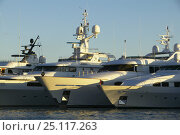 Купить «Superyachts in Gustavia for the St Barts Bucket, Saint Barthelemy, Caribbean.», фото № 25117263, снято 8 декабря 2019 г. (c) Nature Picture Library / Фотобанк Лори