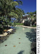 Купить «Starfish in the water at Royal Towers, the famous hotel Atlantis, Paradise Island, Bahamas», фото № 25119727, снято 28 мая 2018 г. (c) Nature Picture Library / Фотобанк Лори
