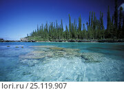 Купить «Saltwater lagoon lined with coral at Baie D'Oro on the Ile des Pins (Isle of Pines / Kanak). Native Cook pines (Araucaria columnaris) are on the shore. Grande Terre, New Caledonia, Melanesia.», фото № 25119907, снято 17 июля 2018 г. (c) Nature Picture Library / Фотобанк Лори