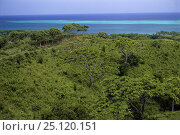 Купить «Forest and reef near French Harbour, Roatan, Honduras.», фото № 25120151, снято 7 августа 2020 г. (c) Nature Picture Library / Фотобанк Лори