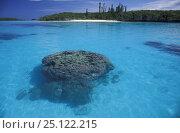 Купить «Coral off Ile des Pins (Isle of Pines / Kanak), Grande Terre, New Caledonia, Melanesia.», фото № 25122215, снято 4 июля 2020 г. (c) Nature Picture Library / Фотобанк Лори