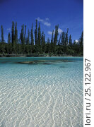 Купить «Saltwater lagoon lined with coral at Baie D'Oro on the Ile des Pins (Isle of Pines / Kanak), with native Cook pines (Araucaria columnaris). Grande Terre, New Caledonia, Melanesia.», фото № 25122967, снято 17 июля 2018 г. (c) Nature Picture Library / Фотобанк Лори