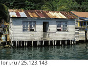 Купить «Palafitte house in French harbour, Roatan, Honduras.», фото № 25123143, снято 7 августа 2020 г. (c) Nature Picture Library / Фотобанк Лори
