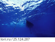 """Купить «Underwater view of the hull and keel of """"Shaman,"""" an 88 ft yacht anchored in Tonga, part of the Vava'u Group of islands, South Pacific, 2000.», фото № 25124287, снято 25 июня 2019 г. (c) Nature Picture Library / Фотобанк Лори"""
