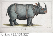 Купить «Copperplate illustration of Indian rhinoceros (Rhinoceros unicornis) by W. Read with later hand colouring. From 'Nature Displayed in the Heavens and on Earth' by Simeon Shaw 1823», фото № 25131527, снято 21 мая 2018 г. (c) Nature Picture Library / Фотобанк Лори