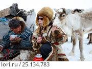 Купить «Nenet woman feeding avka, pet reindeer calf (Rangifer tarandus) in Yar-Sale district, Yamal, Northwest Siberia, Russia. April 2016.», фото № 25134783, снято 19 апреля 2019 г. (c) Nature Picture Library / Фотобанк Лори