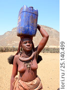 Купить «Himba woman returning from the waterpoint, carrying on plastic can full of water on her head, during the dry season, Marienfluss Valley, Kaokoland Desert, Namibia. October 2015», фото № 25140499, снято 26 мая 2019 г. (c) Nature Picture Library / Фотобанк Лори