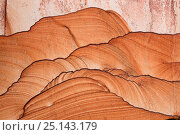 Купить «Picture sandstone, part of the Shinarump Formation, from 180 million to 220 million years ago formed by water and wind, Utah, USA.», фото № 25143179, снято 14 августа 2018 г. (c) Nature Picture Library / Фотобанк Лори