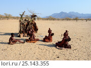 Купить «Himba women sitting together beside temporary hut, Marienfluss Valley. Kaokoland, Namibia. October 2015», фото № 25143355, снято 21 июля 2018 г. (c) Nature Picture Library / Фотобанк Лори
