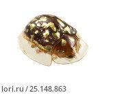 Купить «Shield beetle (Chrysomelidae) Gamboa, Panama Meetyourneighbours.net project», фото № 25148863, снято 19 февраля 2019 г. (c) Nature Picture Library / Фотобанк Лори