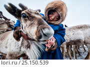 Купить «Nenet girl feeding Reindeer (Rangifer tarandus) during summer migration, Yamal Peninsula, Russia. May.», фото № 25150539, снято 15 июля 2019 г. (c) Nature Picture Library / Фотобанк Лори
