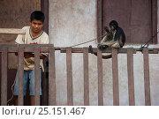 Boy tying up pet Tufted capuchin (Sapajus apella) on to fence, Urymaguas, Amazon, Peru, November 2006. Стоковое фото, фотограф Cyril Ruoso / Nature Picture Library / Фотобанк Лори